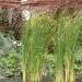 Jardins de Chaumont - Couleurs d'automne